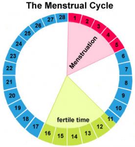 siklus menstruasi normal