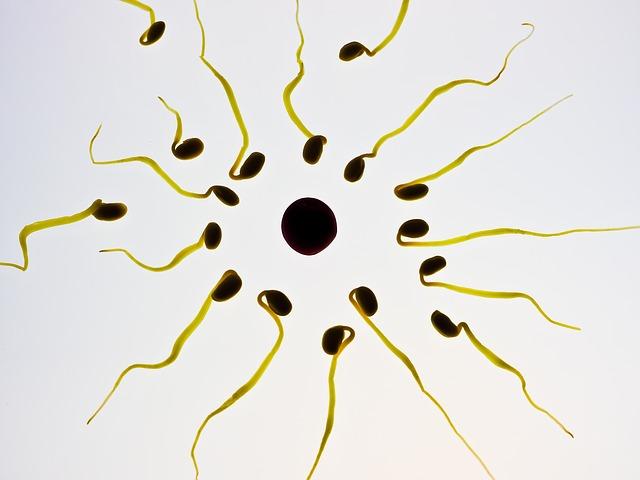 meningatkan kualitas sperma pria